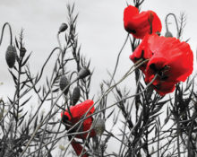 Join us at King George's Hall for Special Remembrance Concert to mark the 100 years since the Armistice was signed
